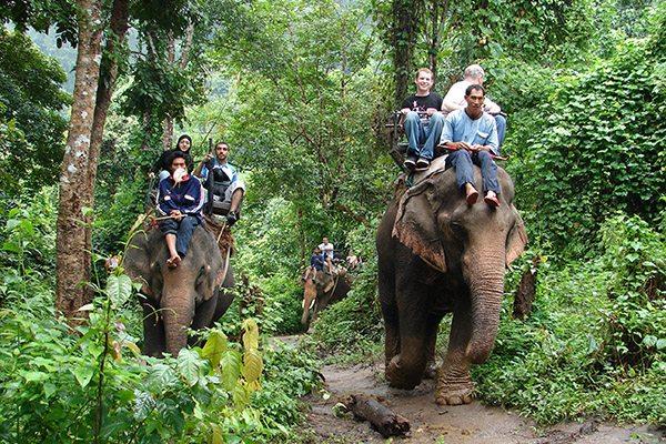 Maetaeng Elephant Park Wedding Services