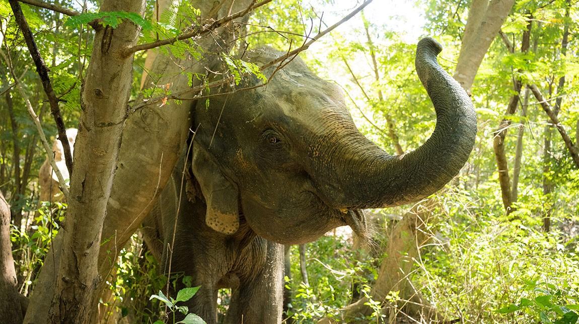 Elephant Park Wedding Venue